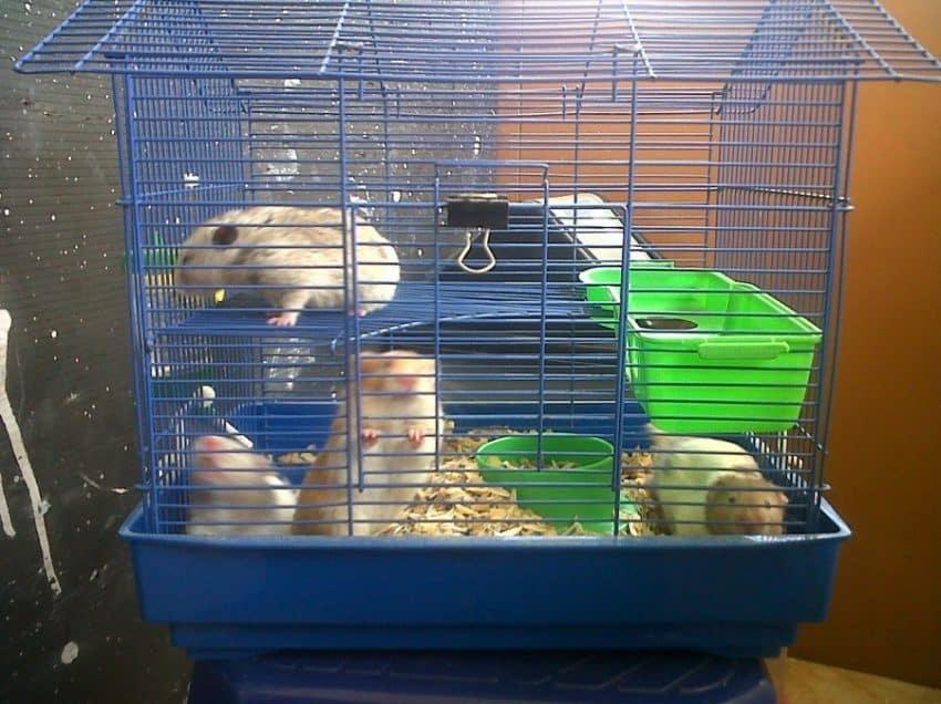 7 Cara Membuat Kandang Hamster dengan Mudah
