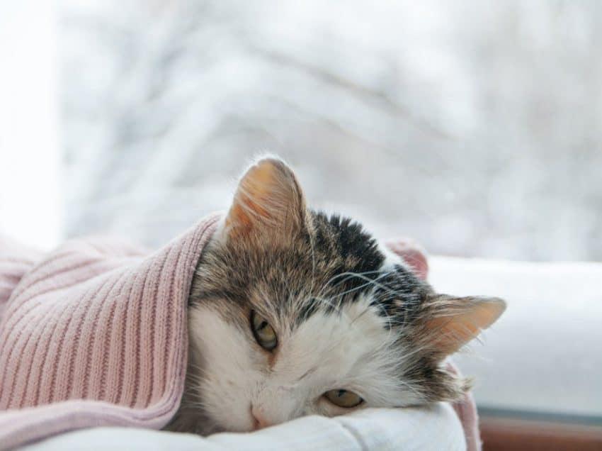 5 Cara Mengatasi Kucing Tidak Mau Makan Dan Tidur Terus Yang Efektif