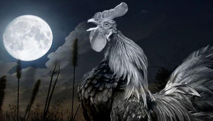 7 Arti Ayam Berkokok Jam 12 Malam yang Sering Bikin Penasaran