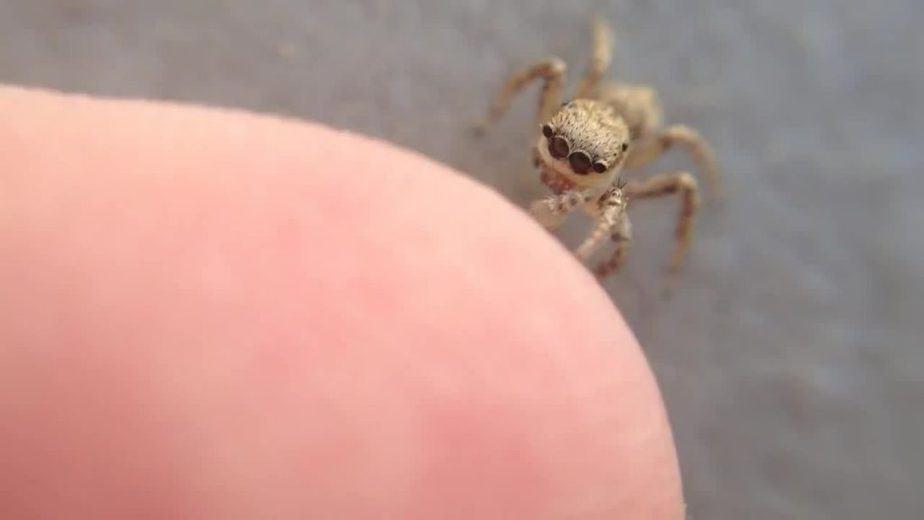 Banyak yang mengatakan untuk tidak membunuh seekor laba Jenis Laba-Laba Rumahan dan Manfaat Ketika Memeliharanya