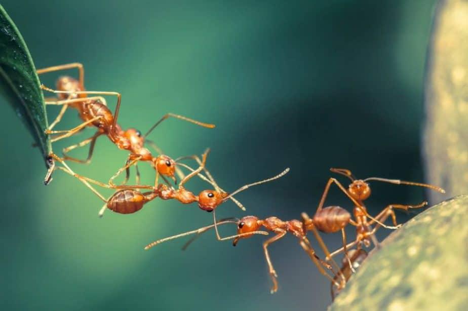 bahkan sampai tak terlihat dikenal dengan nama semut Jenis-Jenis Semut yang Sering Ditemukan di Sekitar