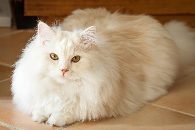 7 Cara Merawat Bulu Kucing Paling Mudah Dilakukan