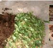 Jenis Pakan Cacing Tanah dan Cara Membuatnya