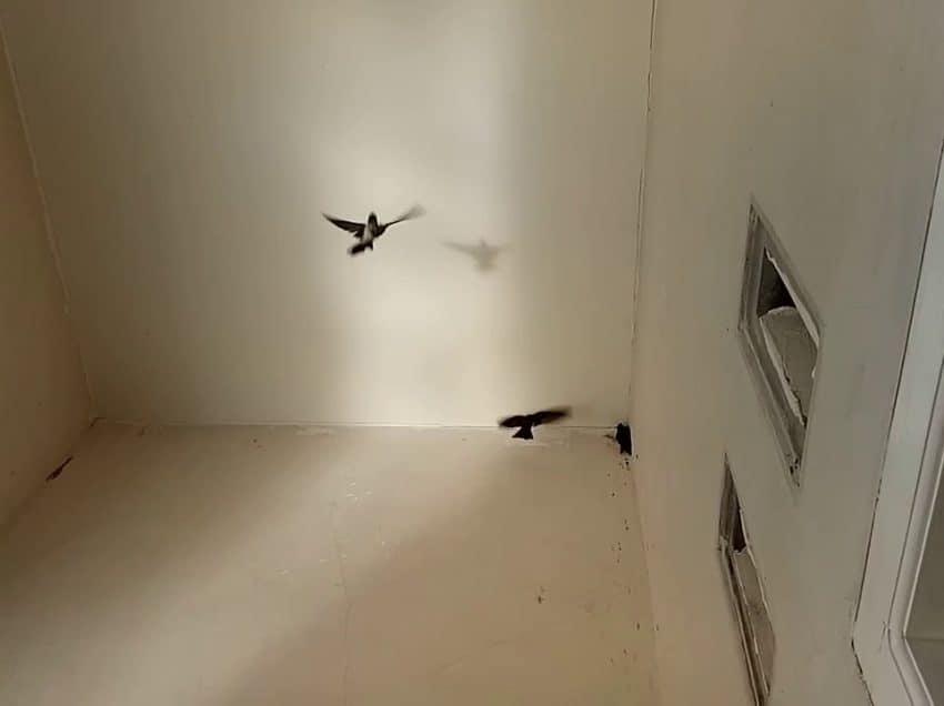 6 Arti Burung Masuk Rumah Menurut Islam