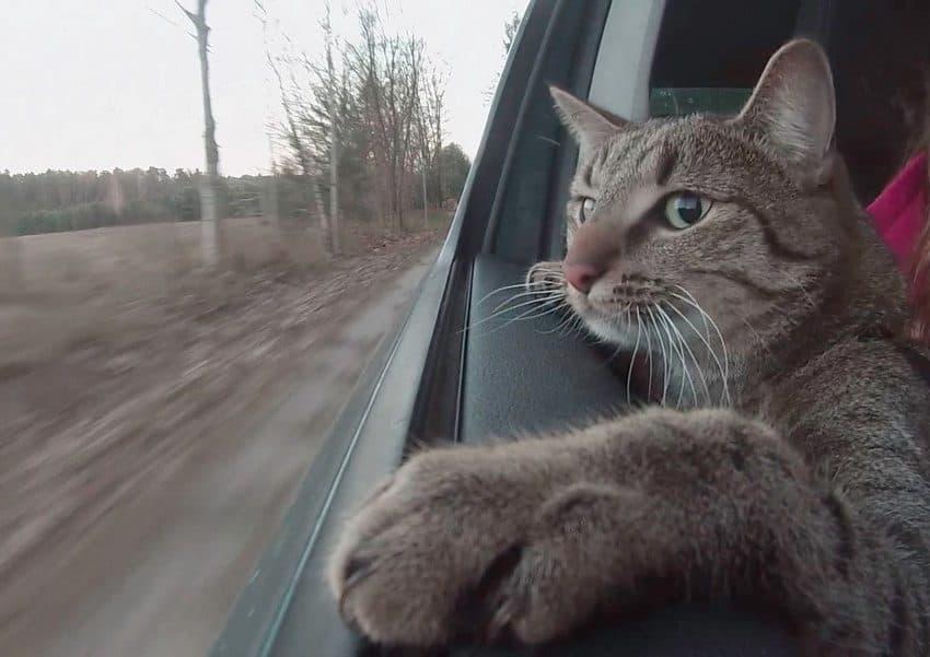 8 Ciri-Ciri Kucing Mabuk Perjalanan yang Perlu Diperhatikan