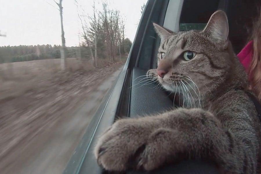 Kucing Mabuk