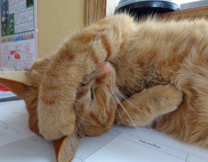 Kucing Stress