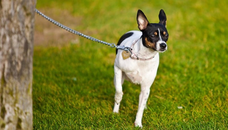 Cara Membuat Tali Anjing Sendiri dengan Mudah, Aman, dan Nyaman