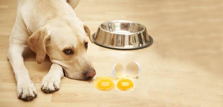 12 Jenis Makanan yang Tidak Boleh untuk Anjing