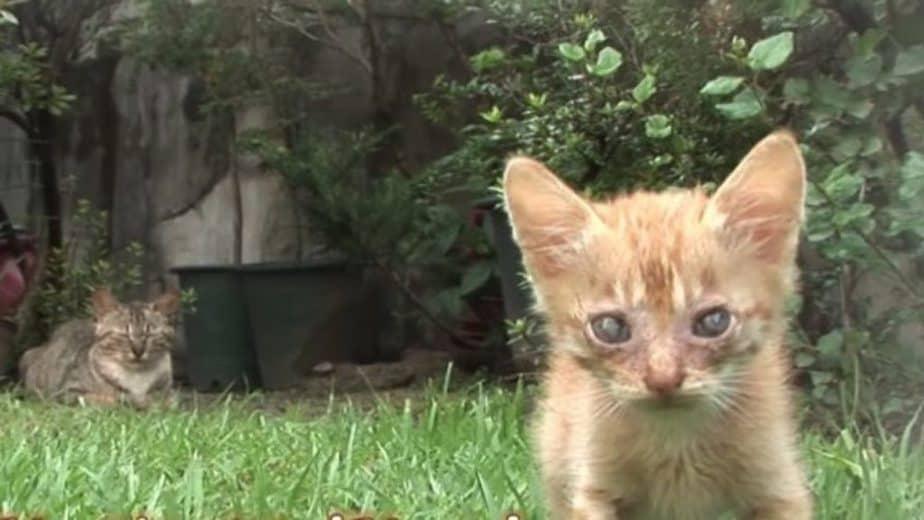 Anak Kucing Buta