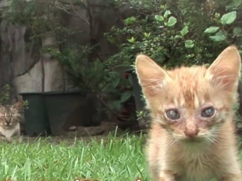 Penyebab Anak Kucing Terlahir Buta dan Teknik Perawatan Paling Tepat