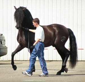 Kuda Andalusia