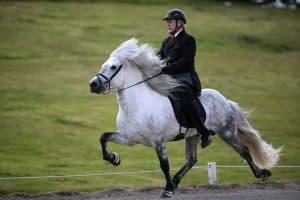 Kuda Islandia