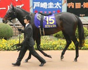 Kuda Thoroughbred