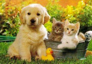 Anjing dan Kucing 1