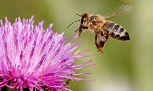 Lebah Pekerja