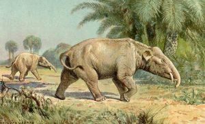 Palaemastodon